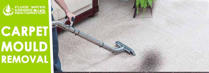 Carpet Mould Removal Paradise